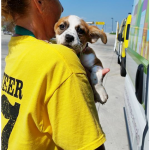 PetEx Rescue 'n Transport Volunteer and Puppy
